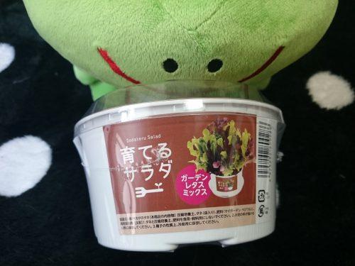 育てるサラダ ガーデンレタスミックス