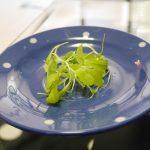 ファミマガーデン 育てるサラダ ガーデンレタスミックスを実際に育ててみたけど育たなかった